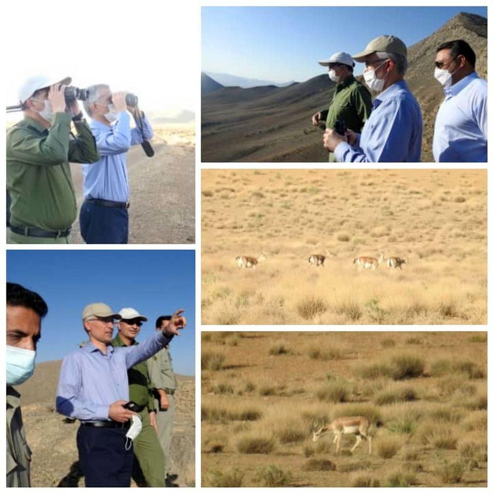 مدیرعامل ذوب آهن اصفهان از پارک ملی قمیشلو بازدید کرد